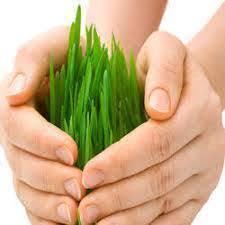 Agriculture Reinsurance Market'