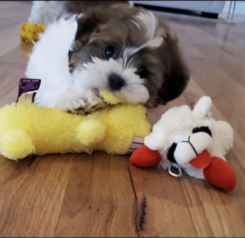 Dog Toys - MultiPet'