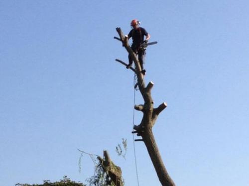 Tree Surgery'