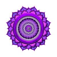 Yoga Nisarga - Yoga Teacher Training Logo