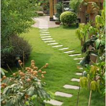 Lawn And Garden'