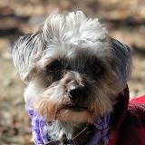 Abby the Pup Logo