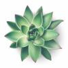Company Logo For Succulents Greener'