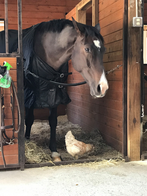 Horse Therapy For Anxiety'