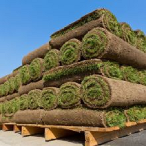 Turf Grass Producers'