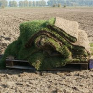 Sod Laying Services'