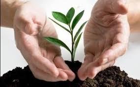 Agricultural Crop Insurance Market'