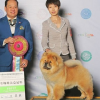 Yan Huang International Kennel
