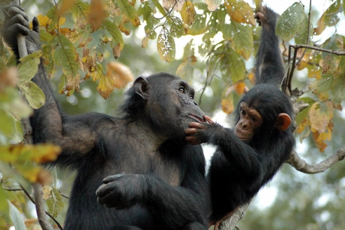 © the Jane Goodall Institute/By Anna Mosser'