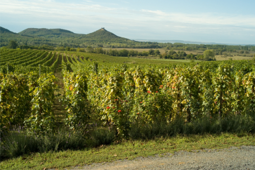 Historical Hungarian Wine Region Badacsony Opens to the Publ'
