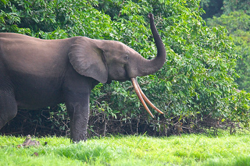 Stop the Slaughter of the Elephants'