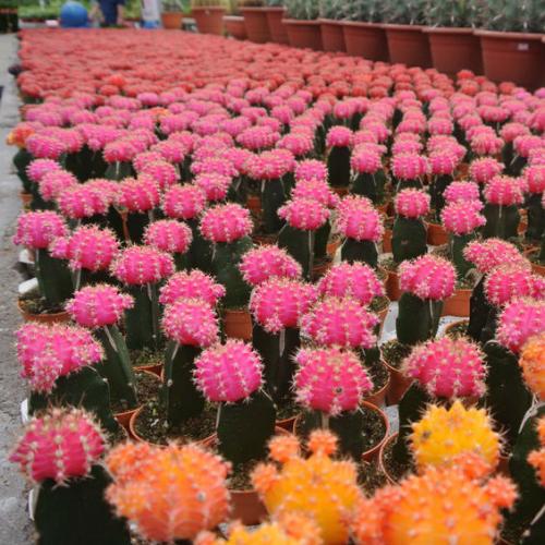 Flowers'