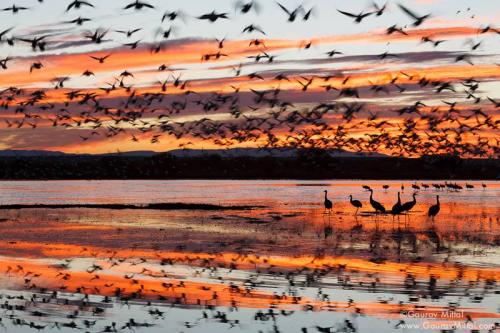 Sense of Place - by Gaurav Mittal Bird Phtography'