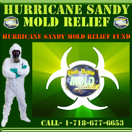 NYC mold removal for Hurricane Sandy