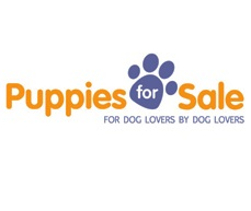 Puppies for Sale'