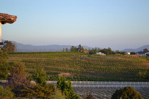 Que Syrah - LGBT-Friendly Wine Country Resort'