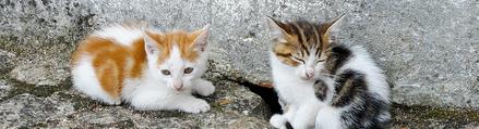 kittens for sale'