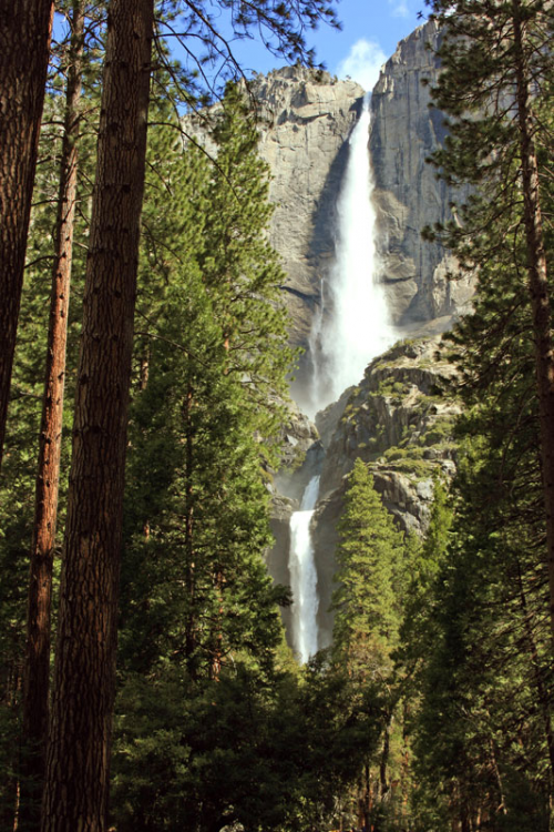 Yosemite Falls Background'