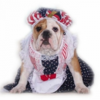 Betsy Ross Dress from Pet Adorn