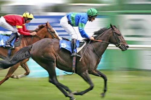 HorseBettingAction.com'