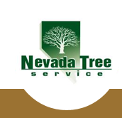 Tree Removal Service by Nevada Tree Service'