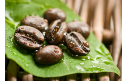 Pure Green Coffee Bean Extracts'