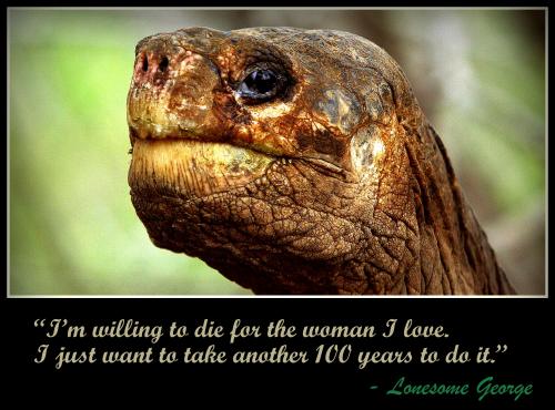 Galapagos Tortoise'