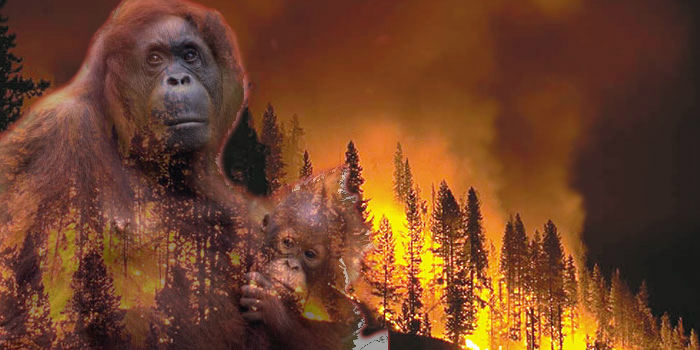 Orangutans Oregon wild fire