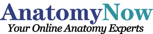Anatomy Now Logo'