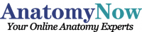 Anatomy Now Logo