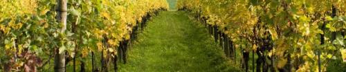 Herzog Wine Cellars'
