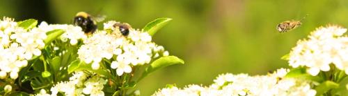 Bee Repopulation'