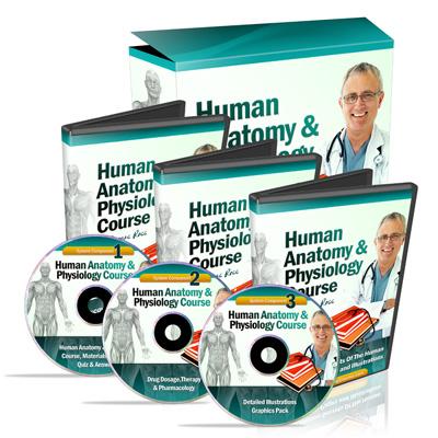 human anatomy'