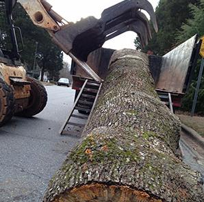 cut tree'