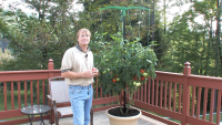 Miracle Stake, Inc. Grow Bigger, Healthier Vegetables