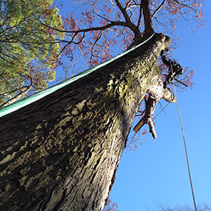 land tree removal'