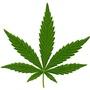 Spokannabis Fest Logo'