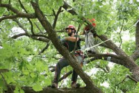 tree removal Atlanta GA