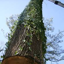 Atlanta tree removal'