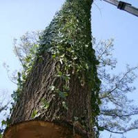 Atlanta tree removal