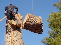 tree removal Atlanta'