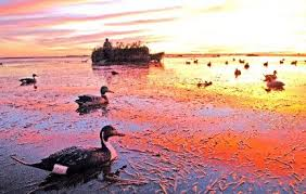 Mississippi duck hunting land'
