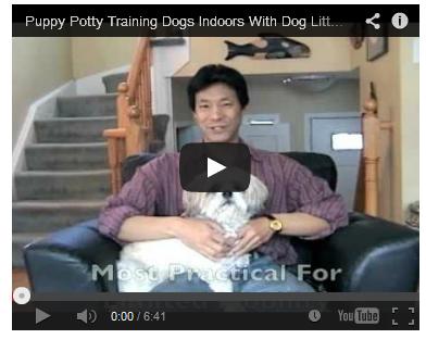 Puppy Potty Training Tips'