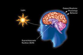circadian rythm'
