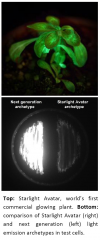 Breakthrough in Glowing Plants Technology'