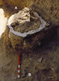 Puppy Skeleton Near Clay Figurine