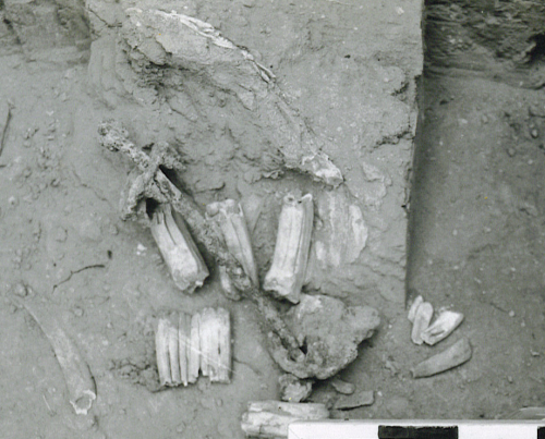 Ancient Equestrian Bit'
