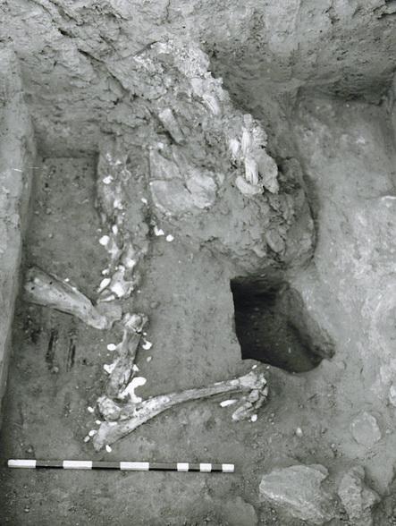 Equid Burial'