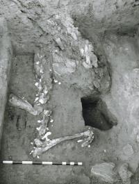 Equid Burial