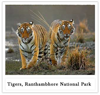 Ranthambhore National Park